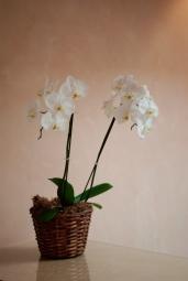 flowers-color-3
