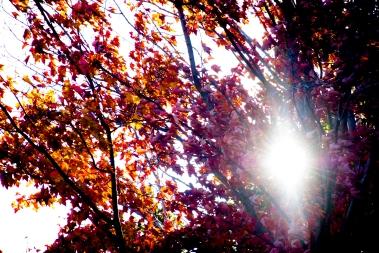october_leaves_sun