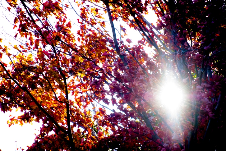 october_leaves_sun